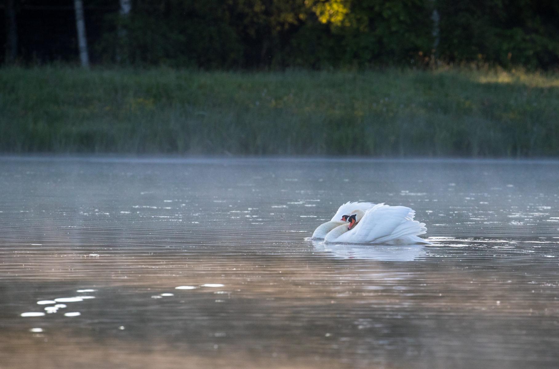 Es ist mein See, ist das klar?