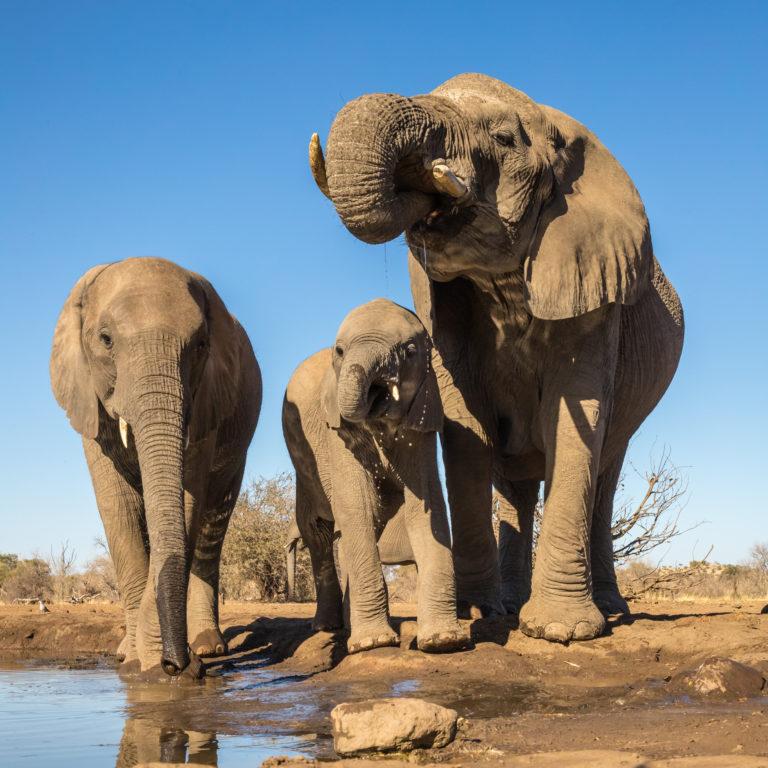 MACHATU Botswana